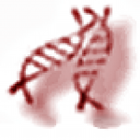 This is a pair of very blurry bits of DNA, aka the fuzzy caterpillars.